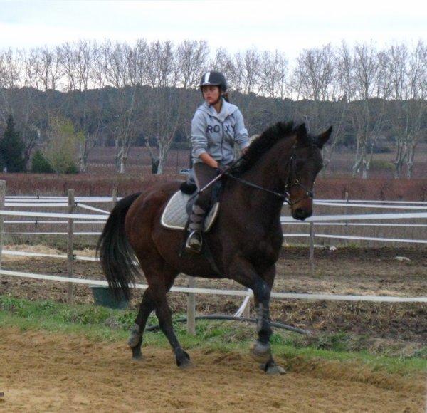 Si un jour on tombe mon cheval et moi, relevé d'abord mon cheval ♥
