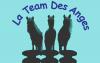 La-Team-Des-Anges