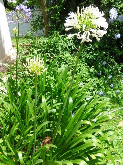 Un petit tour du côté du jardin.