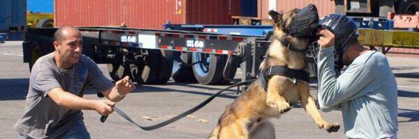 Agent de securite conducteur de chien d intervention.