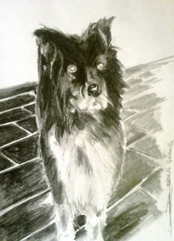 portrait ( TY TANN)