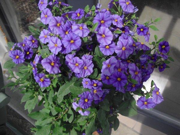 """""""Hibiscus"""", """"Bougainvillier"""", """"Solanum"""", """"Olivier"""""""