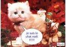 Photo de chatons18190