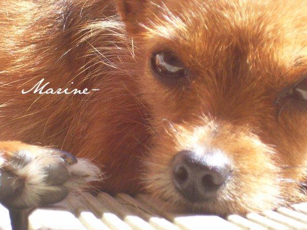 Photo: Ma chienne, aucune retouche.