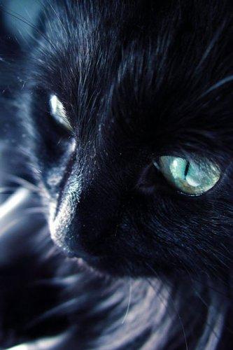 Katze,Familien...