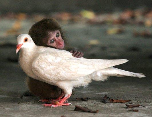 L'amour n'est pas régi par des lois...