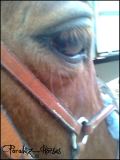 Photo de paradiiz--horses
