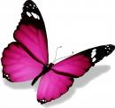 Photo de Butterflydesiles