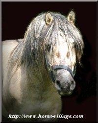 Le poney Highland