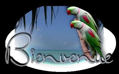 Welcome /Bienvenida /Benvenuto /Bem-vindo/ Gast