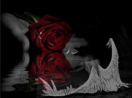 Rose sans amour