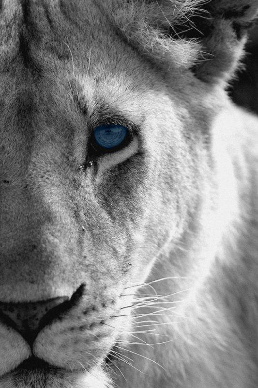 """""""Elles ont grondé de concert, et leurs voix disaient encore: Nous sommes des lionnes."""""""