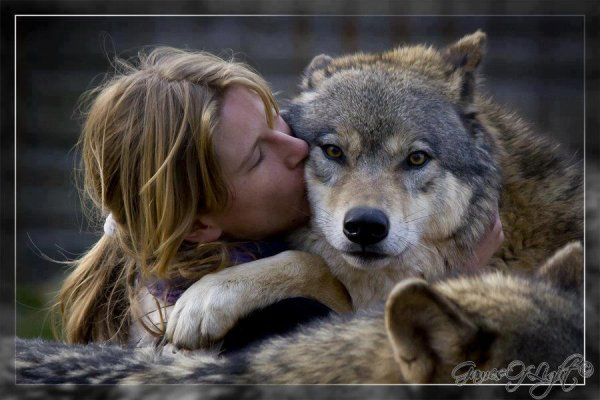 Animaux Sauvage .... Le Loup !