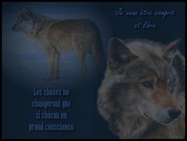 Loups - Renversant  (suite)