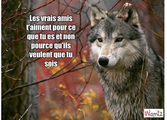 Citations et autres paroles de Loups