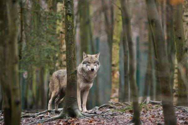 Promenons nous dans les bois...  Suite !
