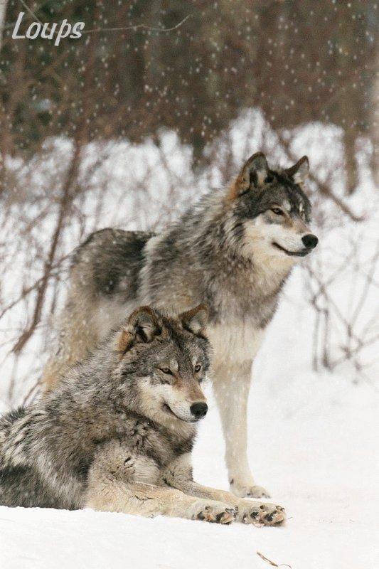 Sauvez ces magnifiques animaux. SVP ! Merci.