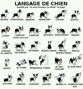 Langage de Chien & Chat