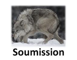Attitudes des Loups (suite)