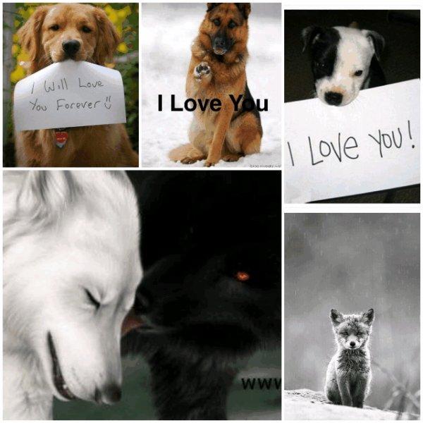 I LOVE ...