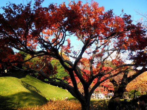 Jardins Koishikawa Kôraku-en