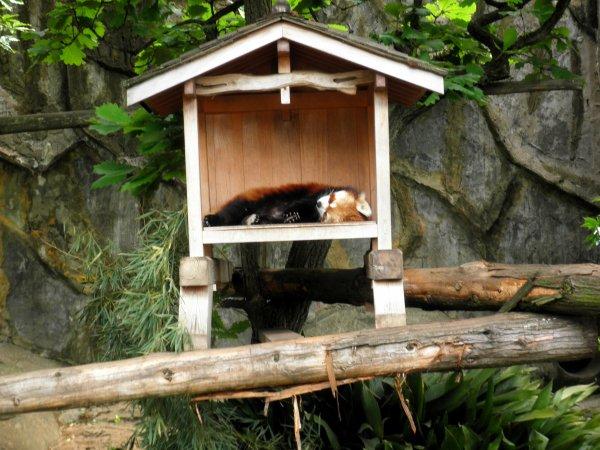 Yokohama, zoo Nogeyama.