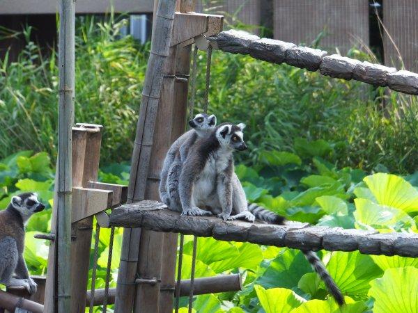 Zoo d'Ueno (partie 2)