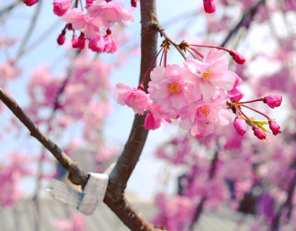 Mercredi 6 Avril.