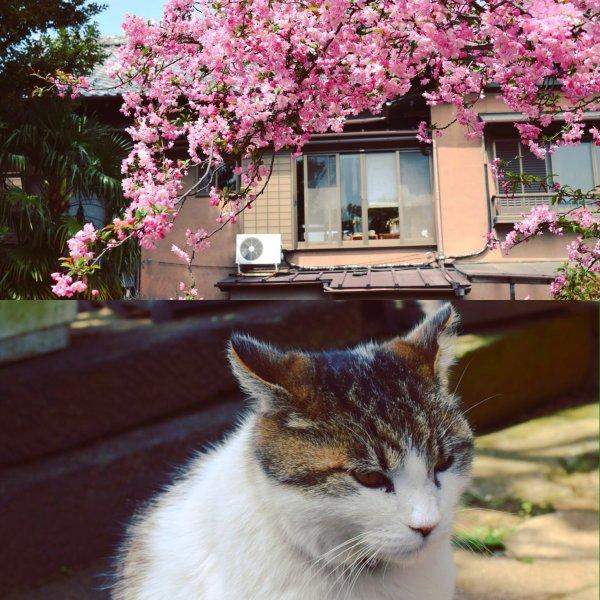 Mercredi 6 Avril (partie 2).