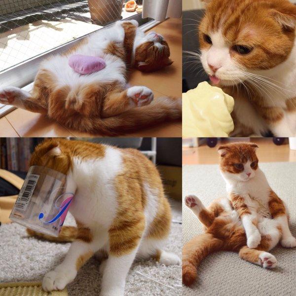 Pistache, ce chat étrange.