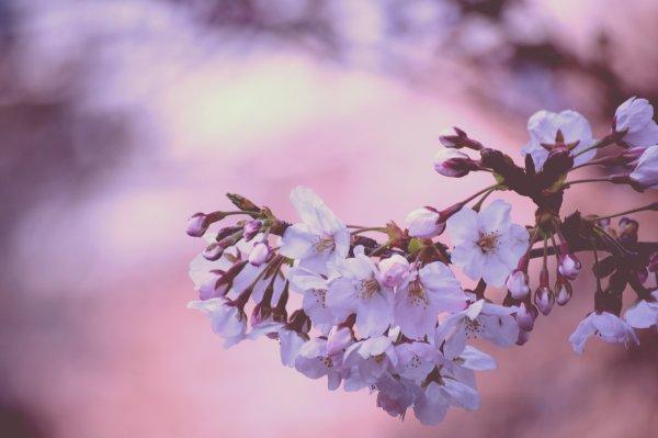 Mardi 4 Avril (partie 2).