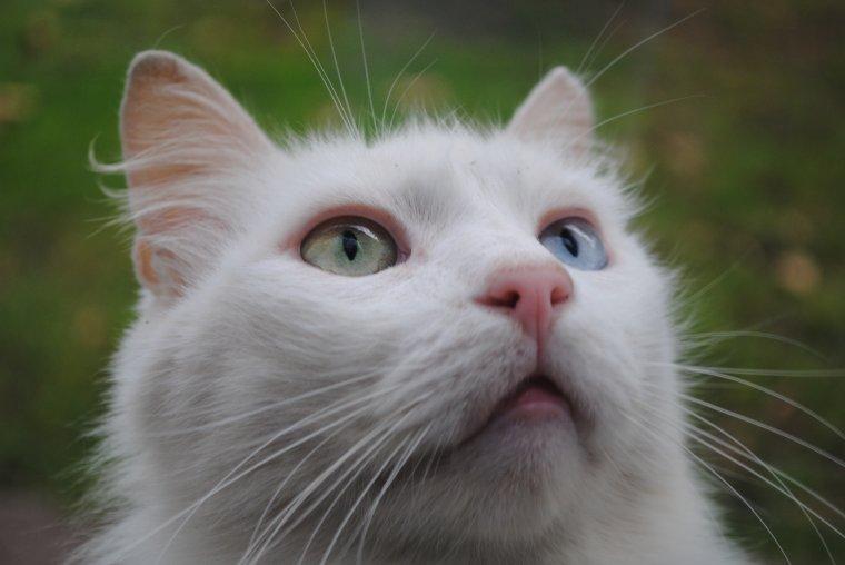 Modéle ; Flocon (ce sont ses vrais yeux)