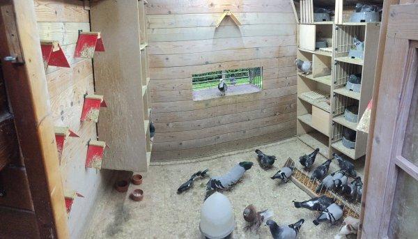 Mon pigeonnier en panorama ;-)
