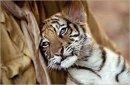Photo de les-animaux-un-kifff