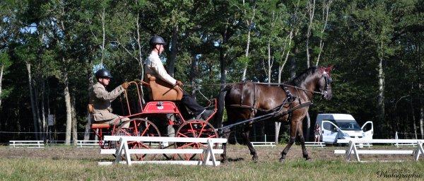 Lamotte Beuvron - Championnat de France d'équitation.