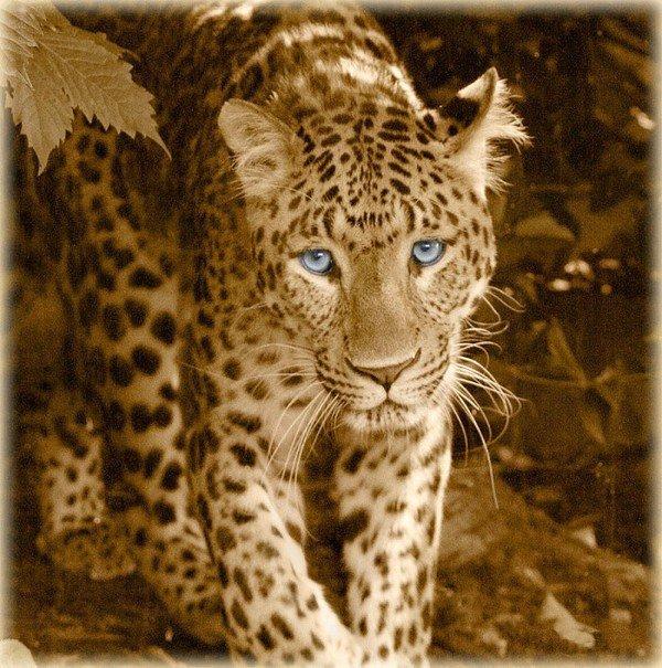 cadeau  de  mon  amie    kdoservezvous    super  les  yeux  suis  un  gros  chat  attention  je  garde  se  blog