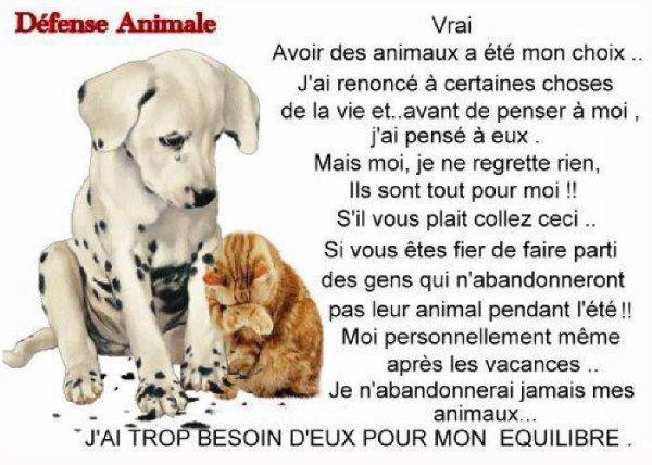 ATTENTION    ABANDON    ANIMAUX     VOUS   LES   MAÎTRES     NE  LES  ABANDONNES  PAS