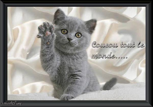 bonjour  mes  amies  amis