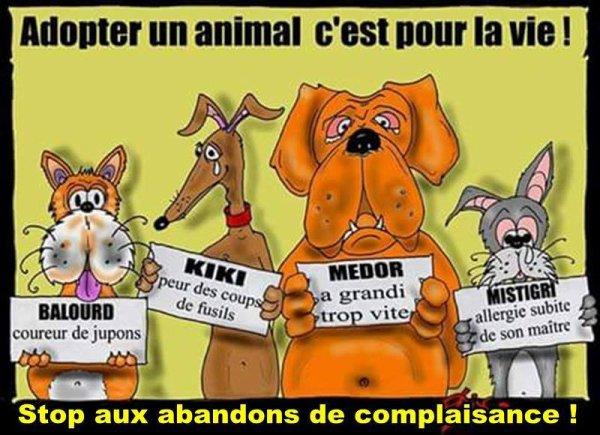 non  a  l'abandon  des  animaux