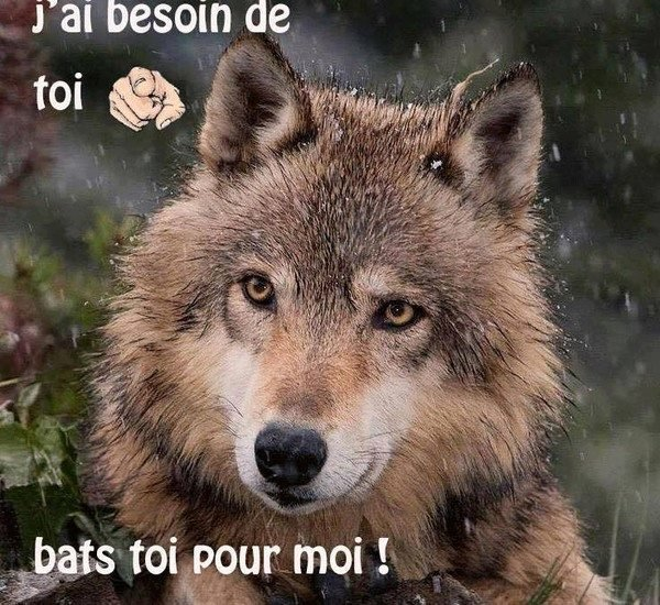 abandonner  pas  vos animaux