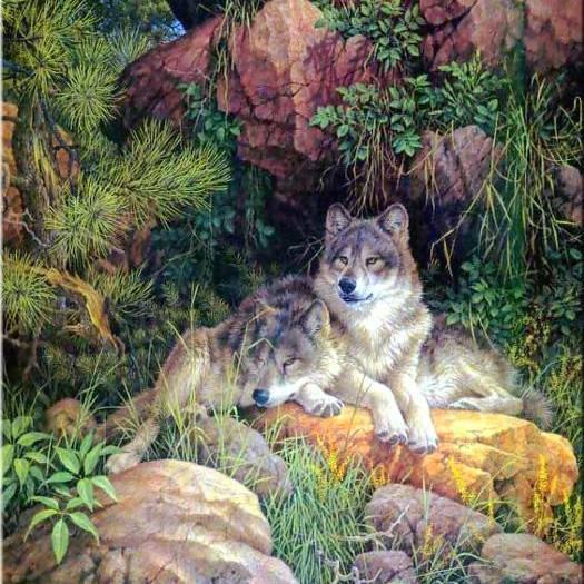 tres belle   photos  des loups