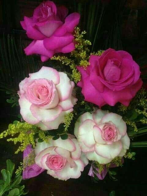 des   roses pour vous j