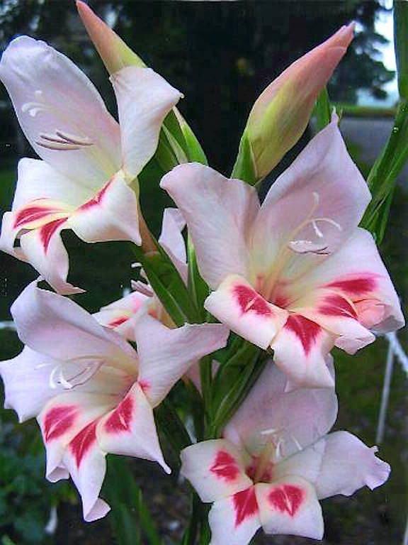 des  fleurs 💐 pour vous