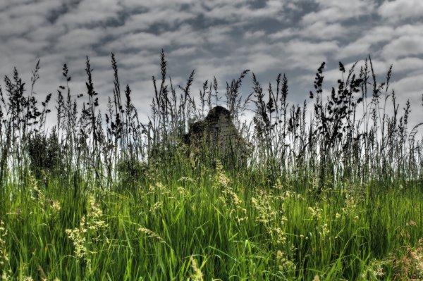 Au milieu des herbes folles ...
