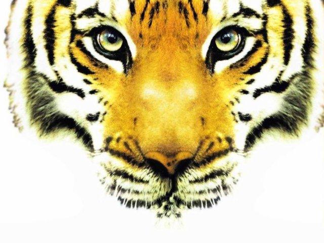 Blog de tigre2111