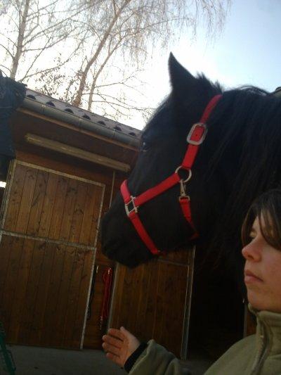 mon cheval quesaco