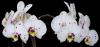 2015 nouvelles floraisons