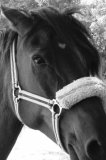 Photo de reve-de-chevaux