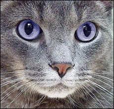 Retrouvez les particularités des chats de Clan