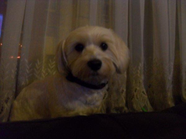 mon chien mystére